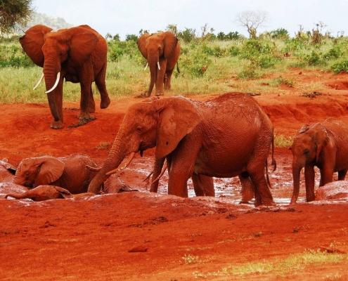 3 Days Tsavo Safari