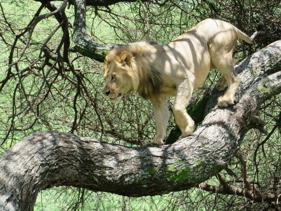 Lake Manyara NP Animals