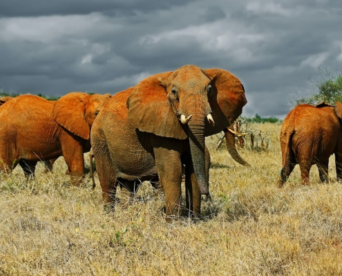 Tsavo East national park