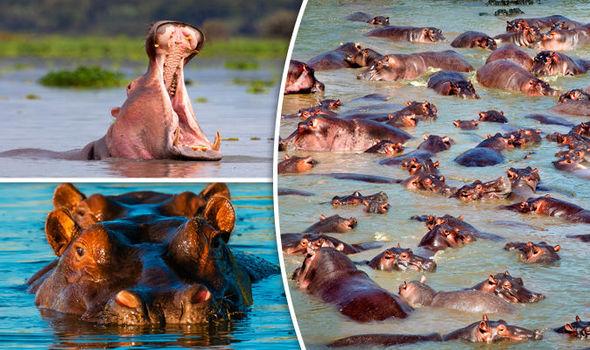 Serengeti national park attractions