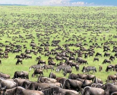 Serengeti national park tours