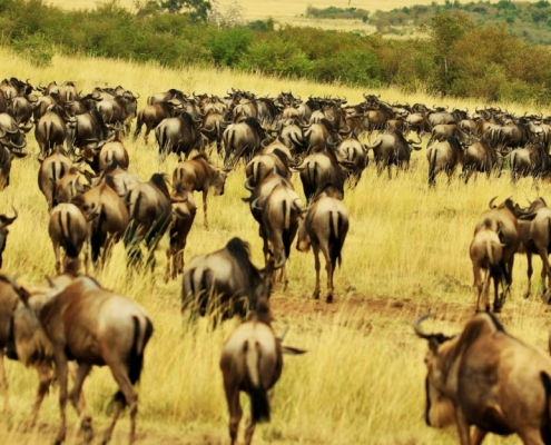 5 Days wildebeest Migration Safari